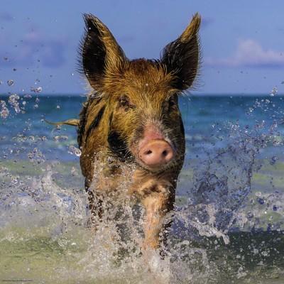PUZZLE 1000 PZS PARADISE PIG- HEYE 29746